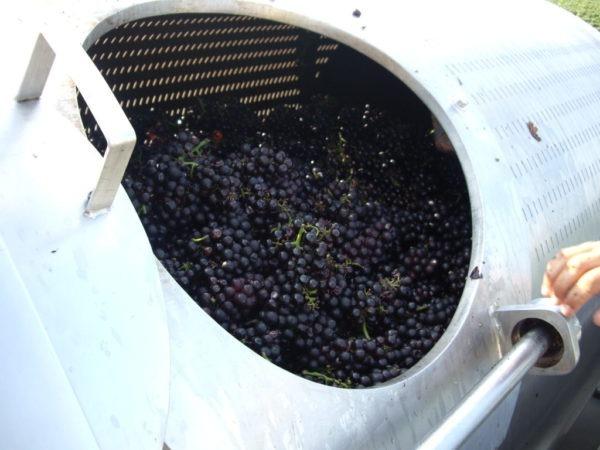 Internal pressmembrane winemaker industrial